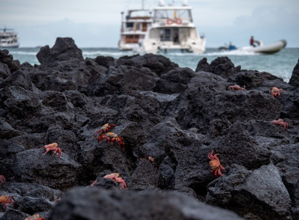 31 New Marine Species Discovered in the Galapagos Archipelago
