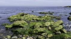 Science Times - An Ancient Gene Family Allows Algae to Synthesize Antifreeze