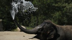 People And Animals Cool Off From Heat Wave