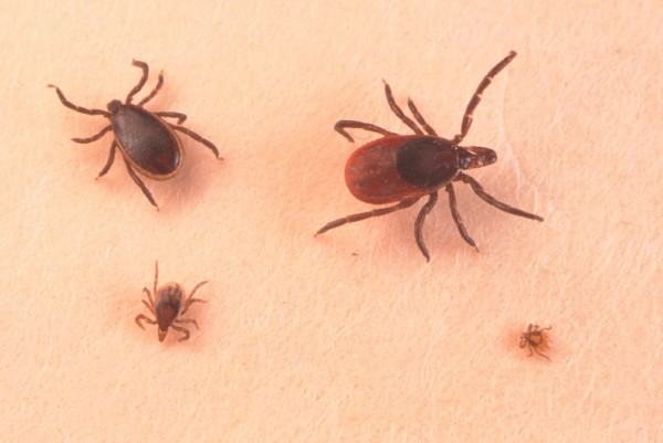VLA15 May be the First Vaccine Against Lyme Disease