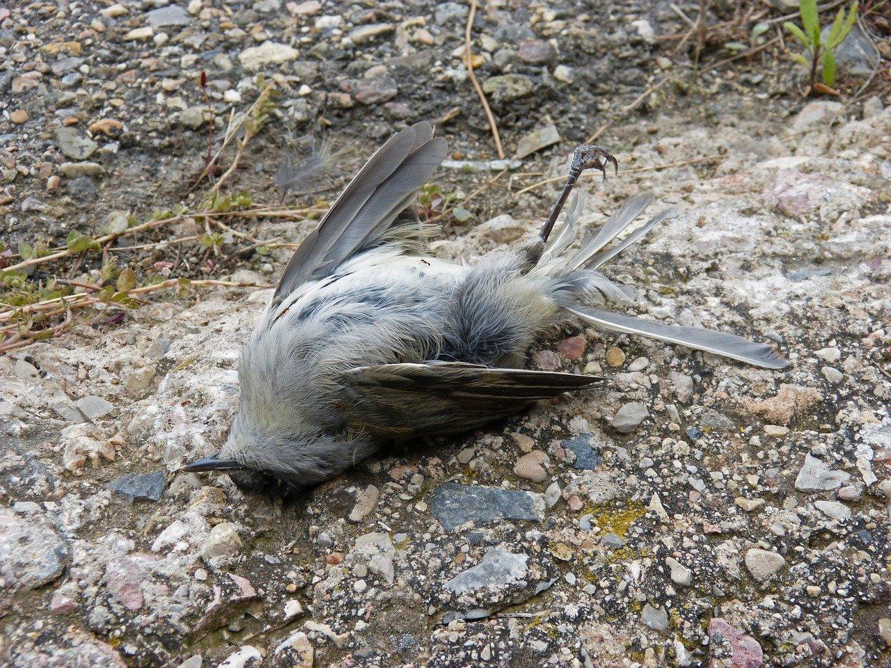 Hàng nghìn con chim chết một cách bí ẩn ở New Mexico