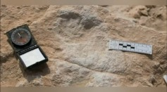 Human Footprints From 120,000 Years Ago Discovered in the Arabian Peninsula