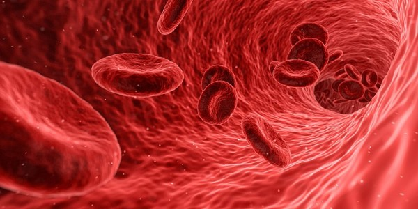 Science Times - Red Blood Cells