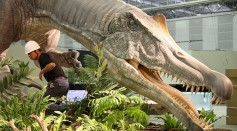 Real Sized Mamenchisaurus Model Installed For Exhibition