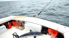 Developing Coronavirus Vaccines Are Harming Shark Species