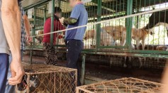 Charity Lady Freethinker Uncovers Horrific Dog Meat Auction House in South Korea