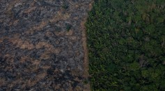 Amazon Deforestation Could Breed Brand New Diseases For the Next Pandemic