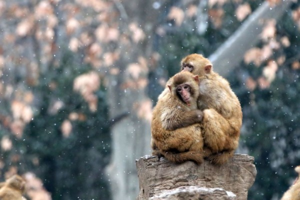 Animals Have Fun In Snowy China