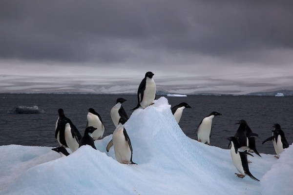 Environmental Organizations Express Concerns Over Lack of Protection In Antarctica