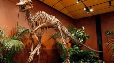 Dinosaur Skeleton To Be Auctioned Off In Las Vegas