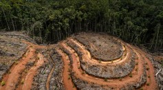 Papua's Indigenous Tribes Fight Against the Palm Oil Industry to Secure Their Future Generations