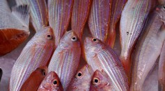 Science Times - Study Finds Americans Don't Eat Adequate Fish, Missing Out on Health Benefits They Need