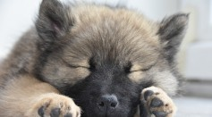 What Do Dogs Dream About When They Are Asleep?