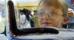 Science Times - Insects Can Be an Essential Teaching Tool for Children, According To Research
