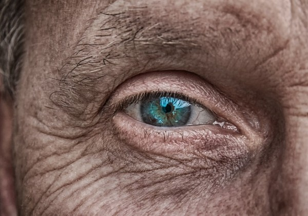 Science Times - Scientists Uncover Approach That Could Reverse Age-Related Vision Loss