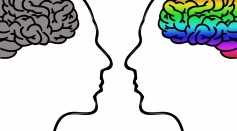 Science Times - Study Presents How the Brain Differentiates Factual Information from Possibility