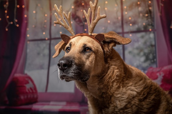 Science Times - Does Your Dog How Each Time You Sing a Christmas Carol? Experts Explain the Instinctive Reason for It