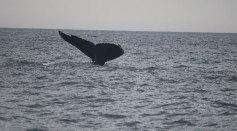 New Population of Blue Whales Found in the Indian Ocean After Scientists Heard Unknown Song