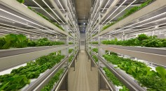 Could AI-Controlled Vertical Farms Be the Answer to Feeding the Growing Population?