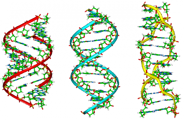 Schematic representation of A, B and Z form of DNA