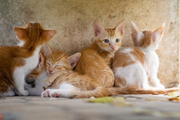 Science Times-Researchers have found parasites in cat feces and linked their findings to a higher risk of human brain tumors