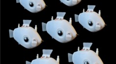 Robo-Fish Can Autonomously Navigate to Form A School of Fish To Perform Tasks Together