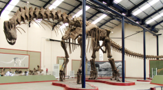 Science Times - Once There was a Dinosaur that Dwarfed Even the 'T Rex,' Paleontologist Suggests