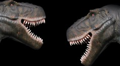Scientists Discovered How Dinosaurs Mate By Reconstructing Its Cloacal Region