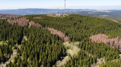 Forests Suffer During Prolonged Dry Weather