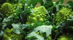 Science Times - Trading At UK's Largest Vegetable Market As Bad Weather Blamed For Shortages