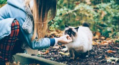 Science Times - Study Reveals Difference in Behavior of Cats and Dogs Towards Their Owners, and With Strangers Around