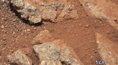 Science Times - Microbes on Earth Could Temporarily Live on Martian Surface