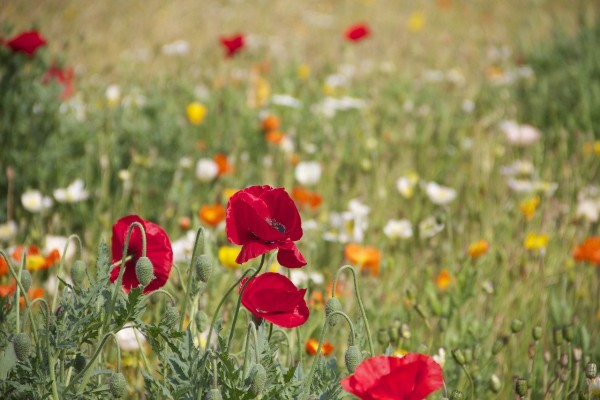 Home Gardens Are the Powerhouse For Pollinating Insects