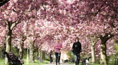 Blossom In Greenwich Park