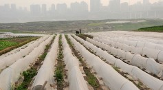 China Increases Agriculture Support To Cool Inflation
