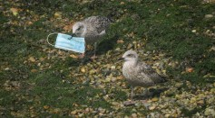 COVID-19 PPE Waste is Harming Animals Everywhere, Researchers Said