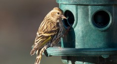 Salmonella Outbreak Linked to Songbirds Sickened 19 People In Eight States
