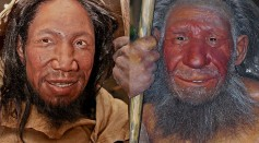 Comparison of faces of Homo sapiens (left) and Homo neanderthalensis (right)