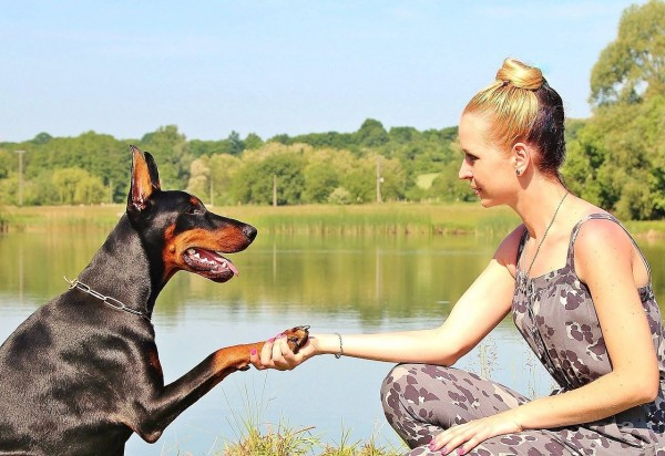 Dogs Can Be Left- or Right-Pawed Too Just Like Humans' Preference On Using Their Hands
