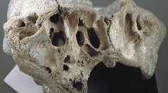 Science Times - Modern Human Brain Evolved 1.7 Million Years Ago in Africa, New Research Concludes