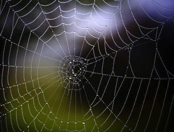 Vibrations From Spiderwebs Turned Into Music: Listen To Its Beautiful Sound