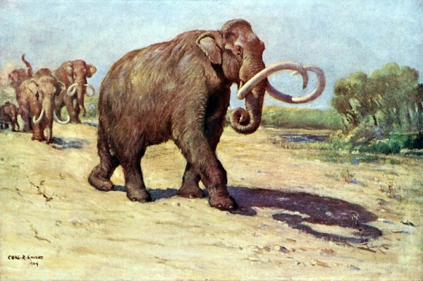 An Illustration of the Columbian Mammoth