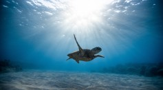 underwater-photography-of-turtle-2397653