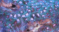 One of the Hard Coral Images Taken at the Ashmore Reef