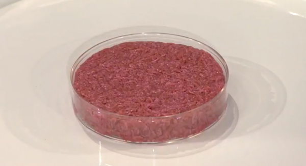 The World's First Cultured Hamburger, Unbaked
