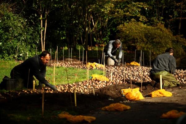Keukenhof Gardens Plant Flower Bulbs For Next Season