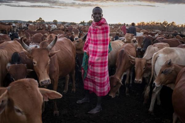 Drop In Wildlife Tourism Dents Conservation Funding In Kenya
