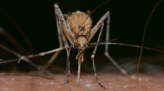 Mosquito Bites: Scientists Discovered Chemical Differences on the Skin That Attracts Mosquitoes