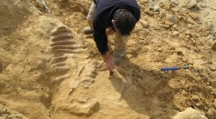 Science Times - Prehistoric Species From Up to 10 Million Years Old Discovered in Calaveras County