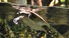 Fossils of Ancient Side-Necked Turtle in Texas Sheds Light on Reptile Migrations 100 Million Years Ago